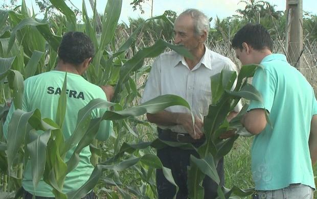 Reportagem retrata as dificuldades na produção do milho. (Foto: Bom Dia Amazônia)