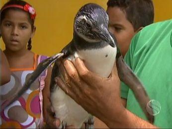 Pinguim foi a atração em escola da Barra dos Coqueiros. (Foto: Reprodução/TV Sergipe)