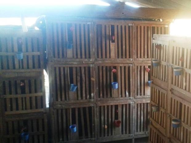 Oitenta e nove aves foram apreendidas (Foto: Polícia Militar/Divulgação)