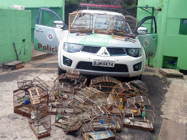 Aves encontradas em Rio Claro foram levadas para centro em Piracicaba (Fot Polícia Ambiental/Divulgação)