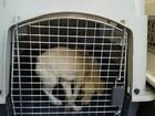 Polícia investiga maus-tratos e recolhe cães de casa em Sorocaba
