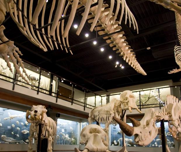 Skeletons (Foto: Divulgação)