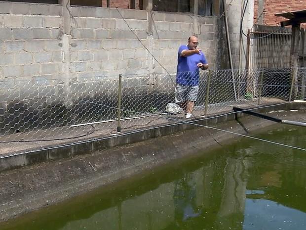 Peixes são colocados em tanques para evitar a proliferação do mosquito (Foto: Reprodução EPTV)
