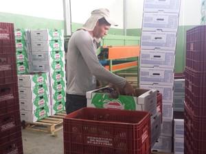 Frutas abastecem mercado interno (Foto: Luana Bernardes/ TV Grande Rio)