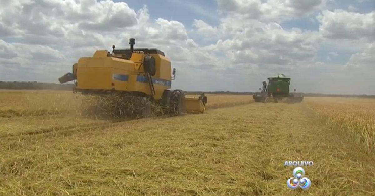 Produtores de RR organizam abertura oficial da colheita do arroz ... - Globo.com