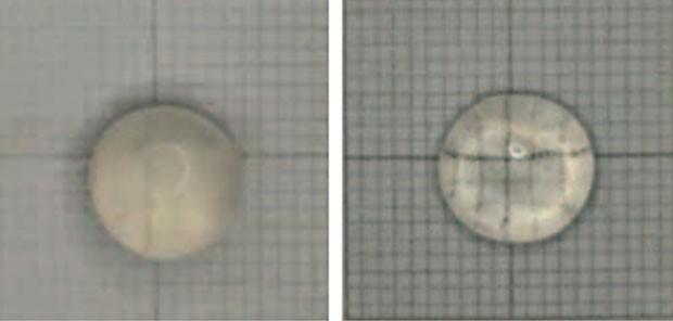 Lentes de coelho com catarata (esquerda) mostrando aumento da transparêcia após o uso de Lanosterol (direita)