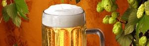 Lúpulo, o tempero da cerveja (Michaela Stejskalova/Shutterstock)