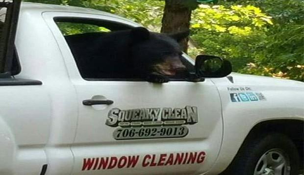Ursa invadiu picape em Big Canoe atrás de comida (Foto: Reprodução/Twitter/WAFF 48)