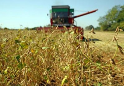 soja_mt_agricultura (Foto: Shutterstock)