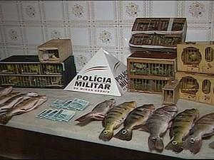 Polícia apreende canários da terra e curiós em Ituiutaba, MG (Foto: Reprodução/TV Integração)