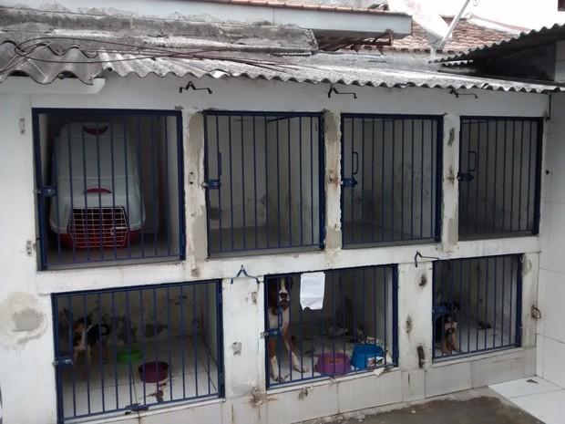 Clínica Preservefoi autuada por abrigar cachorros em local exposto ao calor e ao frio, alguns sem água e comida e em péssimas condições de higiene (Foto: Divulgação/Procon RJ)