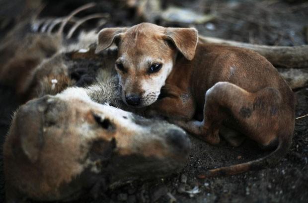 Filhote deita ao lado da cabeça da cadela morta (Foto: Minzayar/Reuters)