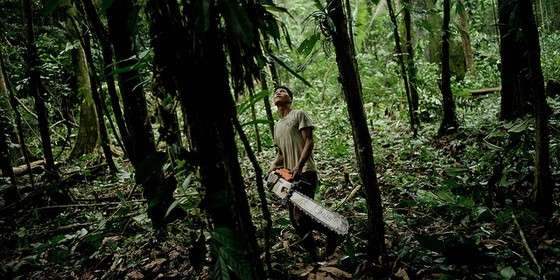 Homem se prepara para derrubar árvore na Amazônia (Foto: Cifor/Flickr)