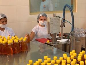 Produção de mel em Simplício Mendes e Picos (Foto: Reprodução/TV Clube)