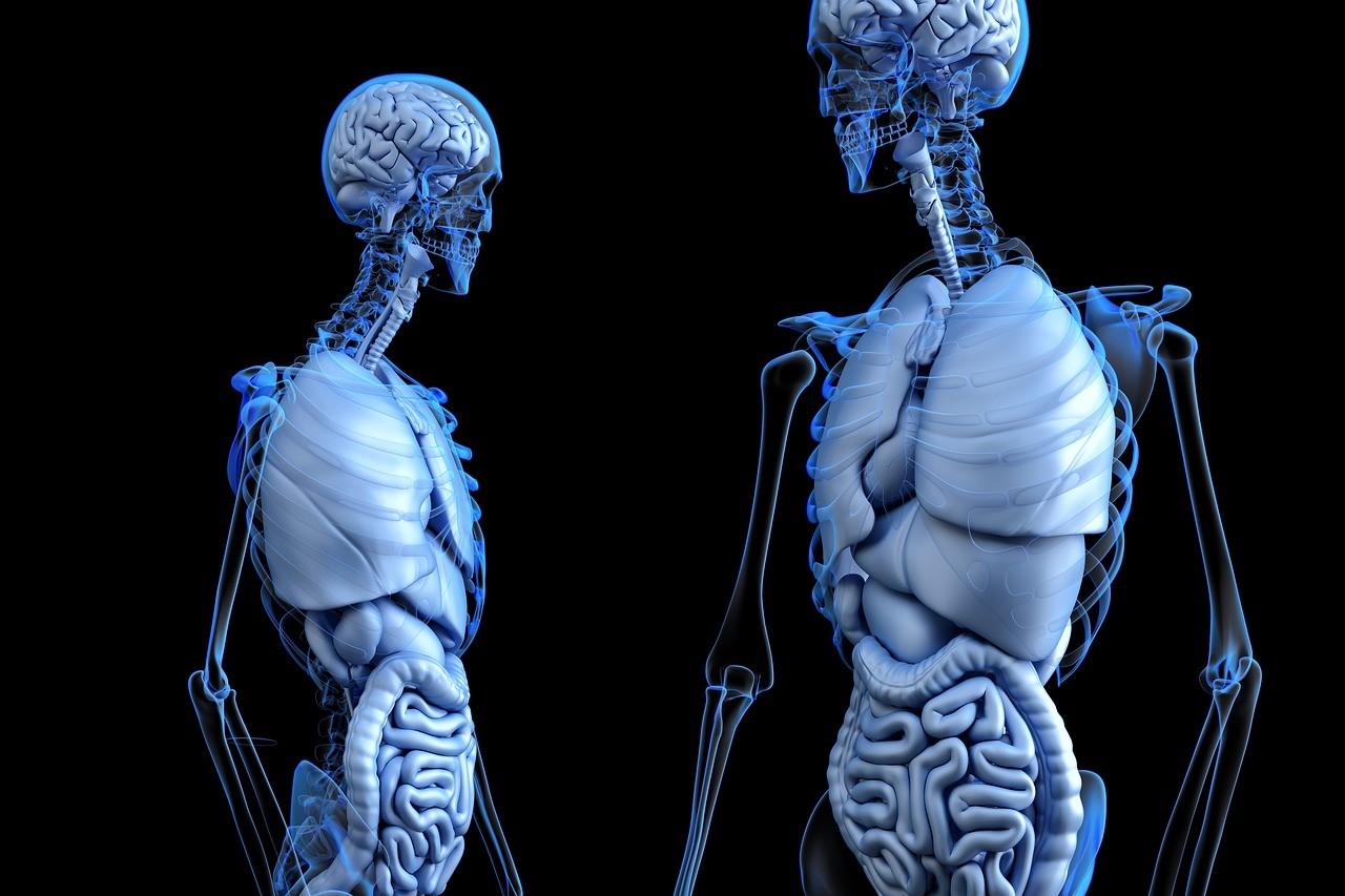 11 fatos que você não conhecia sobre o seu próprio corpo