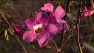 """""""Estação das flores"""", primavera começa nesta sexta-feira (22)"""