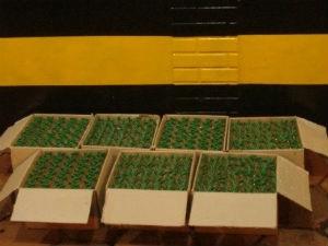 Frascos de lança-perfume estavam escondidos em caixas  (Foto: Divulgação / PRE )
