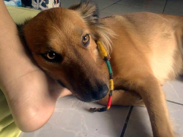 Carmina tem dois anos e está perdida em Manuas (Foto: Arquivo pessoal)