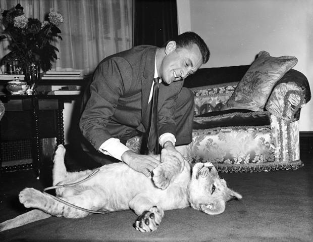 """Kirk Douglas fazendo carinho em """"Spartacus"""", um leão do zoo de NY (Foto: Lee/Hulton Archive)"""