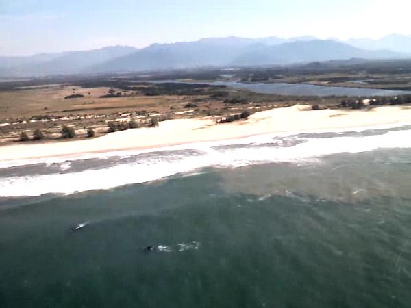 Presença dos mamíferos foi registrada na região da Praia da Gamboa, no município de Paulo Lopes (Foto: Batalhão de Operações Aéreas dos Bombeiros/Divulgação)