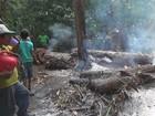Queimadas destroem plantios agrícolas (Reprodução/Rede Amazônica em Roraima)