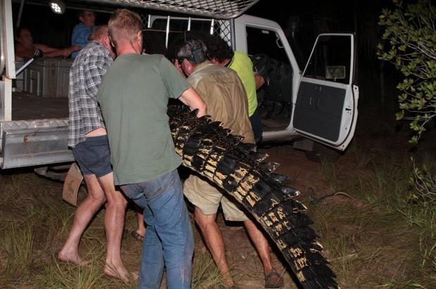 Réptil foi capturado em Mandorah, na Austrália (Foto: Reprodução/Facebook/Northern Territory Parks and Wildlife)