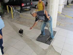 Moradores alimentam o urubu duas vezes por dia (Foto: Anna Gabriela Ribeiro/G1)