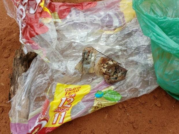 Peixes envenenados foram deixados no portão de acesso à terra indígena Jarudore, ponto onde crianças da etnia bororo costumam aguardar pelos ônibus escolares. (Foto: Assessoria/PRMT-MPF)