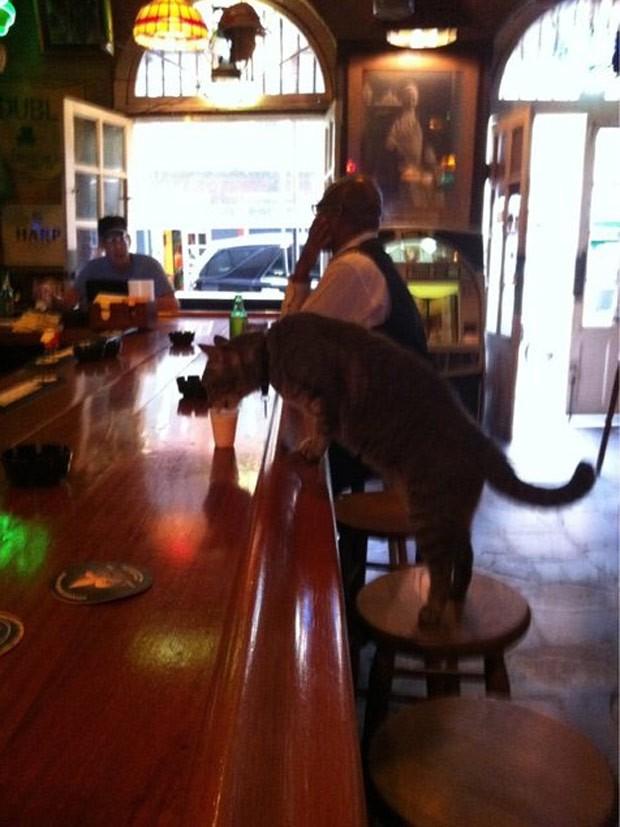 Barman serviu copo de leite após gato se sentar em balcão de bar nos EUA (Foto: Reprodução/Reddit/JBiloxi)