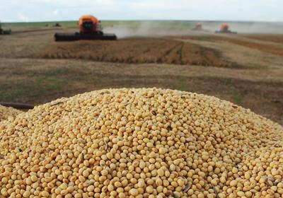 agricultura_soja_grao (Foto: Ed. Globo)