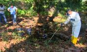 Moradores de Vitória reclamam dos mosquitos 'fora de época' (Divulgação/ TV Gazeta)
