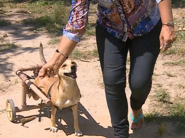 Voluntário cadeira de roda para cães Pindamonhangaba (Foto: Reprodução/TV Vanguarda)