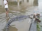 Foto mostra crocodilo capturado ao lado de homem na Tailândia