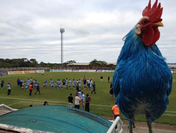 Tissoka, mascote vivo do Ji-Paraná (Foto: Shara Alencar)