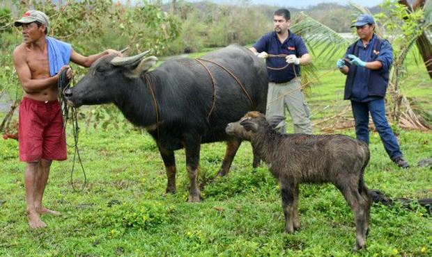 World Animal Protection chega a zonas de desastre depois das agências de trabalho humanitário (Foto: Divulgação/World Animal Protection)