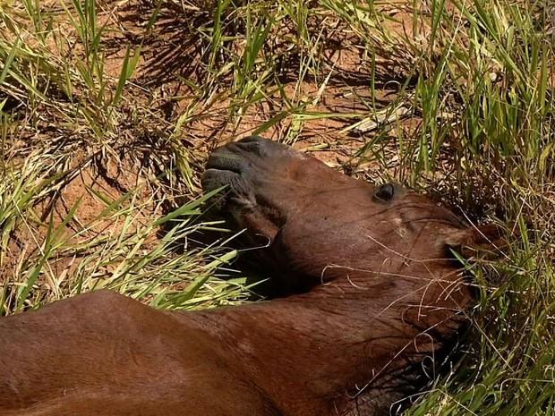 Cavalo abandonado agoniza há cinco dias em Resende (Foto: Reprodução/TV Rio Sul)