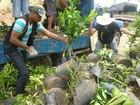 Mais de mil mudas de árvores são destruídas após apreensão no TO