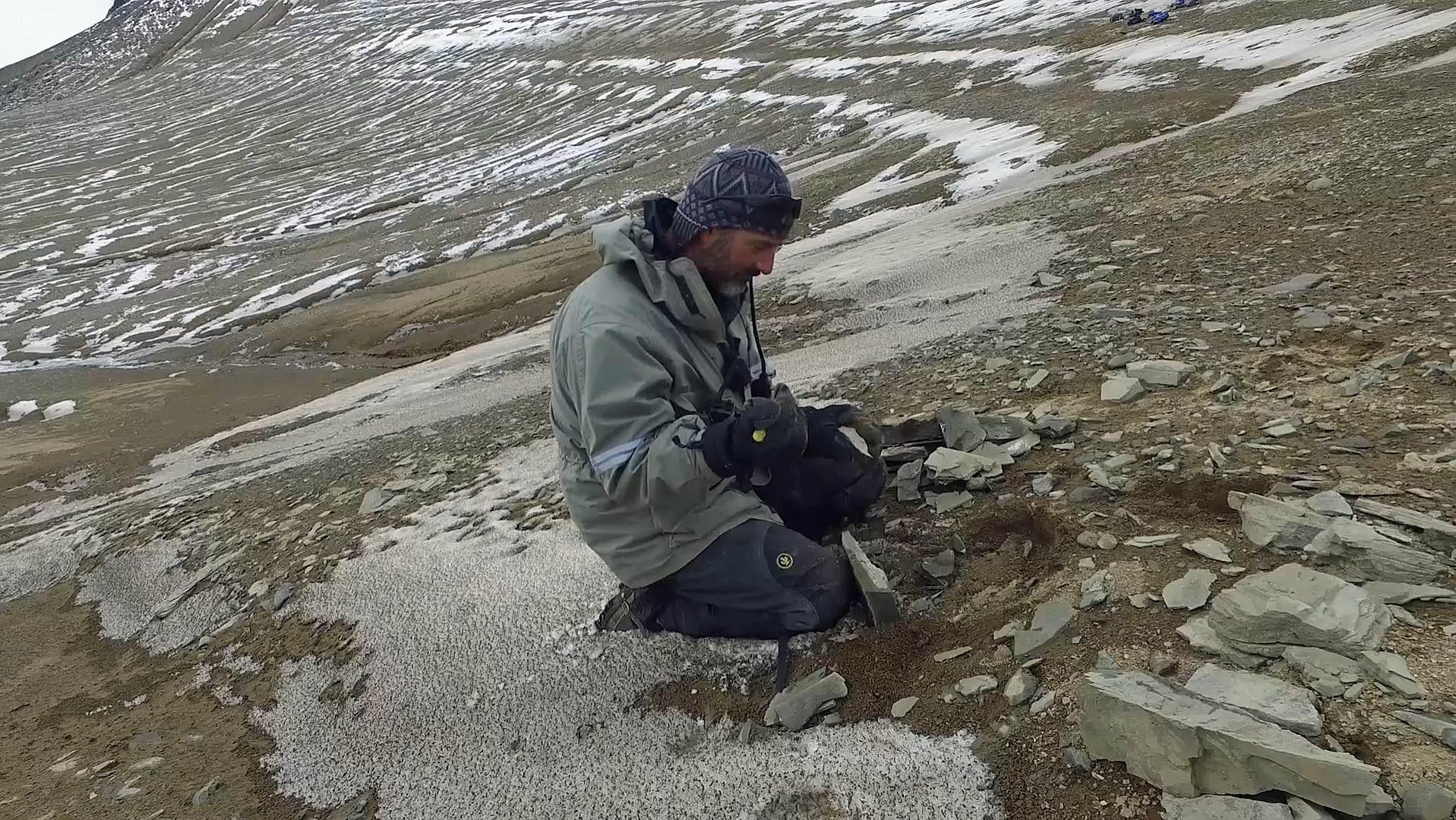 Expedição encontrou fósseis na Antártica (Foto: Universdidade de Queensland/Divulgação)