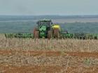 Semeadura de milho chega ao fim em MT com queda de 8% na área