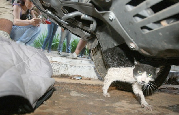 Gato estava embaixo da prote&#231;&#227;o do motor de uma caminhonete (Foto: Sebasti&#227;o Nogueira/O Popular)
