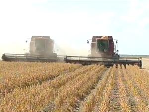 Soja alavancou a produção de grãos no Tocantins (Foto: Reprodução/TV Anhanguera)