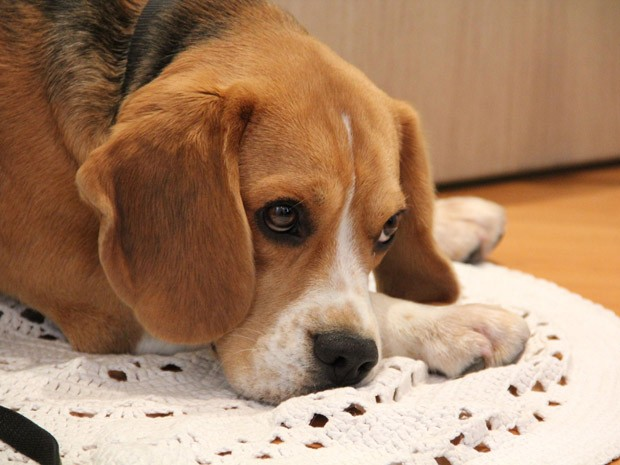 Pets devem ficar livres para procurar abrigos em que se sintam seguros (Foto: Paulo Toledo Piza/G1)