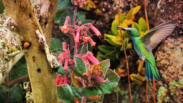 As plantas e aves raras de Pedra Branca, em Minas (Devanir Gino/TG)
