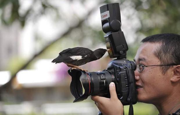 Pássaro de estimação sente uma estranha atração por câmeras fotográficas.  (Foto: Wong Campion/Reuters)