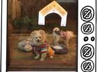 Karina Bacchi mostra 'Casa de Vidro' dos seus cãezinhos