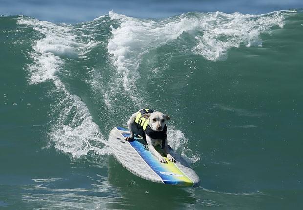 Cães participaram de uma competição de surfe, no domingo (30), em Huntington Beach, no estado da Califórnia (EUA).  (Foto: Lucy Nicholson/Reuters)