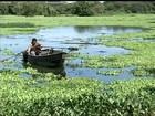 Planta aquática muda a paisagem do Rio Tietê e impressiona pescadores