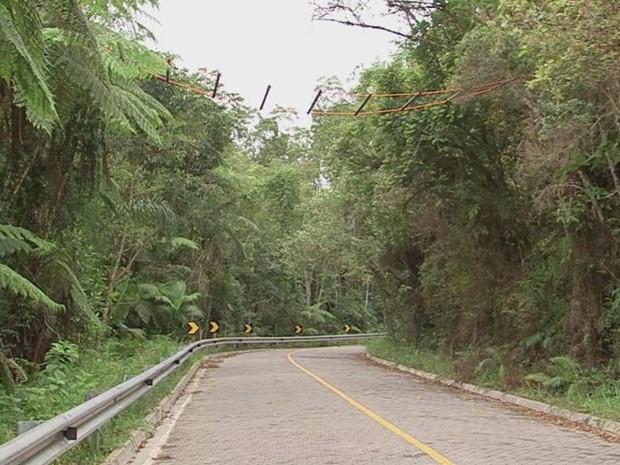 Foram colocadas estruturas para passagem de animais pelas árvores (Foto: Reprodução/ TV TEM)