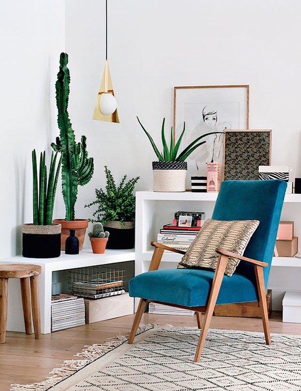 Décor do dia: plantas e modernismo