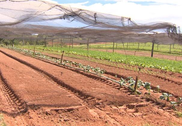 Veja os tipos de telas para sombreamento agrícola disponível no mercado (Foto: Reprodução TV Fronteira)